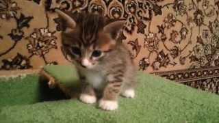 Бесконечно милый котенок(смотри и умиляйся!)