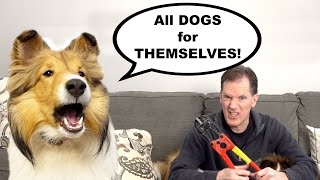 'All Dogs for THEMSELVES!'  Dog Nail Cutting Day! A Biscuit Talky on Cricket the Sheltie Chronicles