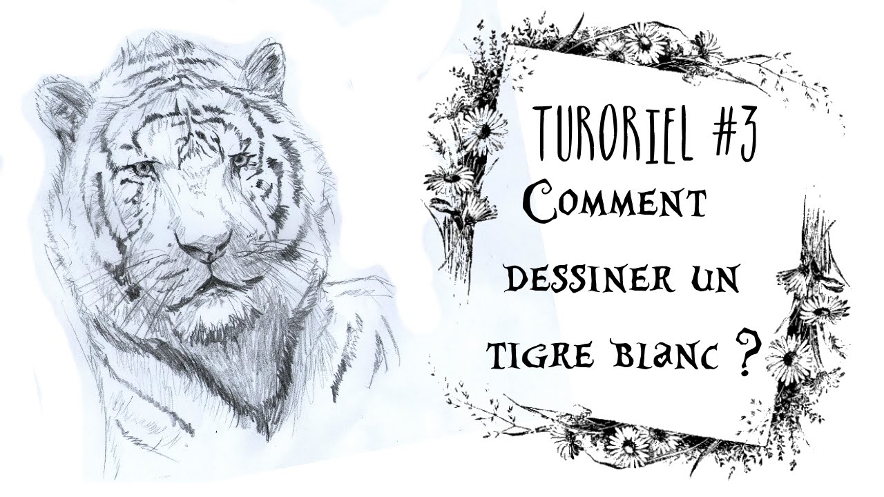 Comment Dessiner Un Tigre Blanc E Njell Art Youtube