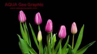 Hoa Nở Về Đêm - Hòa tấu Guitar - Nhạc cảnh hoa nở thật đẹp - X.V