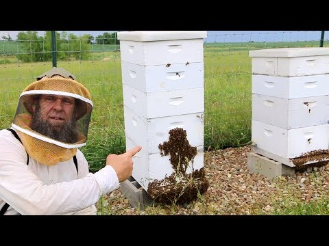 BEE KEEPING - IS THIS NORMAL?