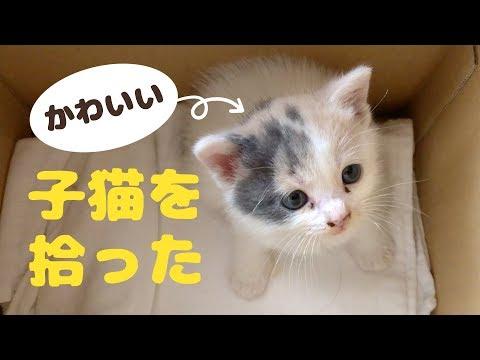 かわいい子猫を拾った。「ぽてと」と名付けて一緒に暮らすことに!