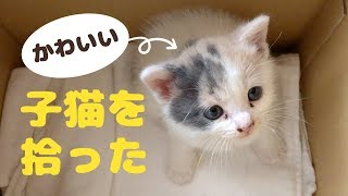 """I picked up a cute kitten. Kittens' name is """"Potato"""""""