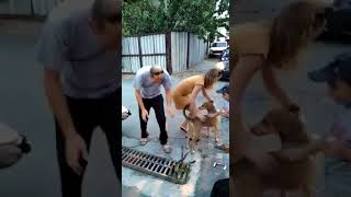 Неравнодушные жители Новороссийска спасли застрявшую в ливневке собаку