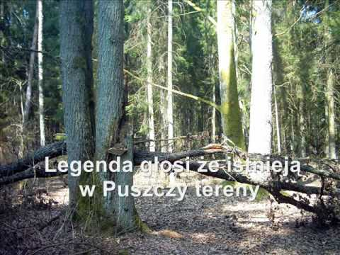 Puszcza Białowieska - Miejsce Mocy