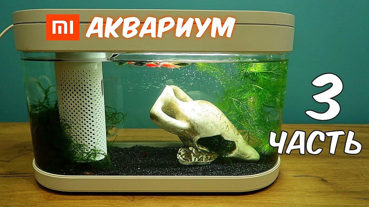 Аквариум XIAOMI Часть 3. Креветки, Растения и новый живой корм! alex boyko