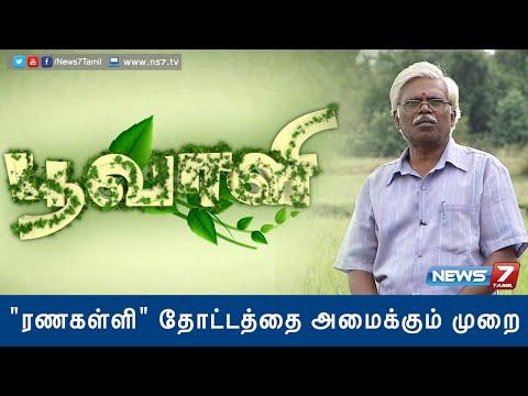 'Ranakalli' plant helps to cure kidney stone | Poovali | News7 Tamil