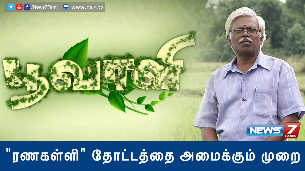 Download 'Ranakalli' plant helps to cure kidney stone | Poovali | News7 Tamil