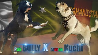 Pakistani Bully Kutta (Beast From East) VS Afghan Kuchi (Afghan Dog)    Dog Breed Comparison