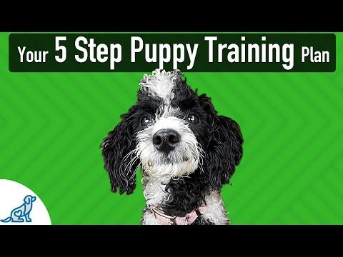 The 5 Steps To Follow When Teaching Your Puppy ANY Skill!