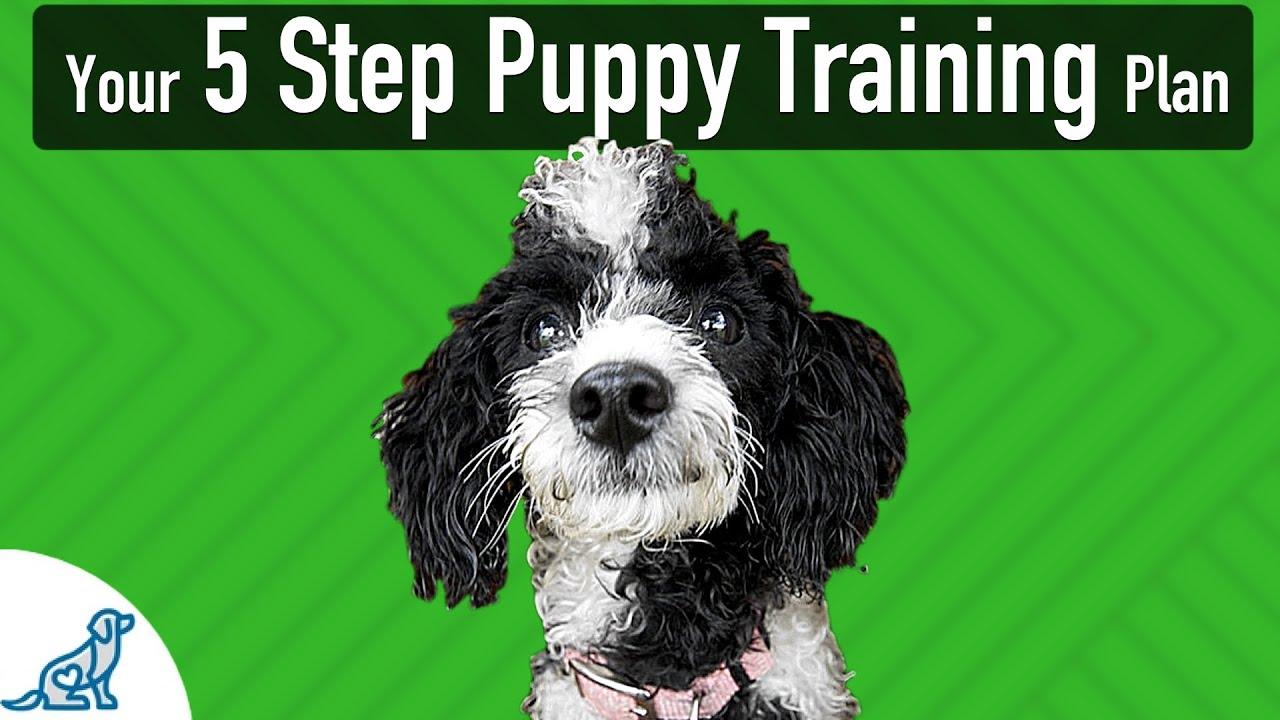 Puppy Training Basics - Your 5 Stages Of Training - Professional Dog  Training Tips