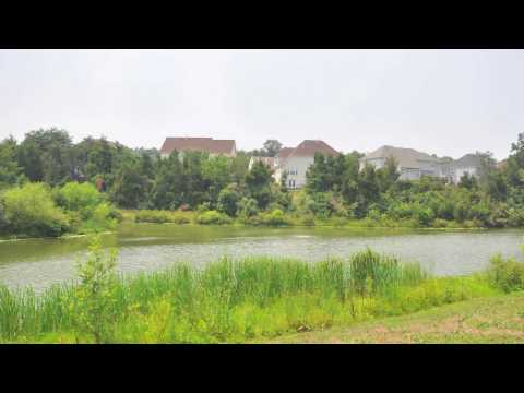 Ashburn Village Neighborhood Guide