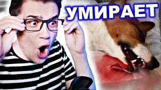 Джина УМЕРЛА !?? Элли Ди ПЛАЧЕТ После Операция |Elli Di Pets| Реакция на Элли Ди Петс Собаки