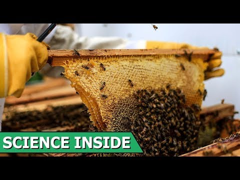 How Bee Venom Helps to Heal Cancer ? | What Controls Body Temperature in Humans ?