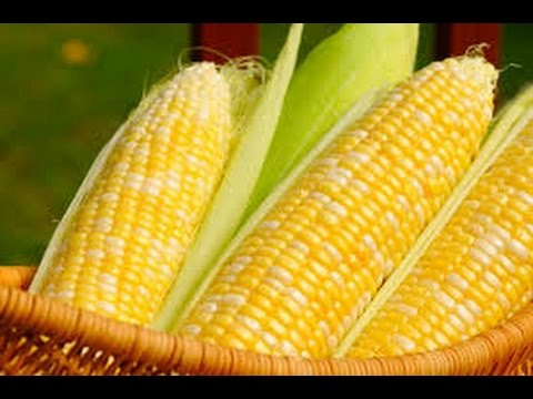 Day Trading 10-06-2016 Market Wrap-Up For Ticker symbol CORN Teucrium Corn Fund,NYSE