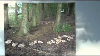 Camping & Caravaning Park - North Wales