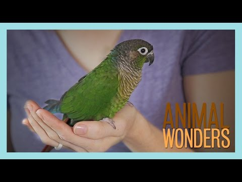 Meet and Greet: Ginger the Conure