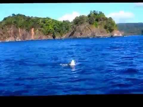 Panama 2012 Paradise Fishing Lodge Chirique Bay