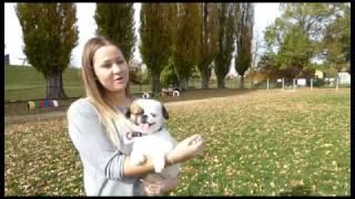 park za pse reportaža