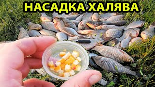 Осенняя насадка Бесплатноя в сентябре карась лещ и карп ловится на нее рыбалка осенью на карася