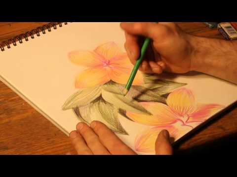 How to Draw Flowers With Colored Pencils