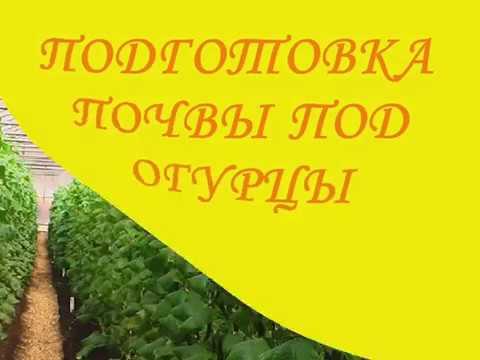 ПОДГОТОВКА ПОЧВЫ ПОД ОГУРЦЫ | подготовка | огурцы | почвы | под