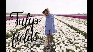 Dreams come true: Tulip fields (Lisse)