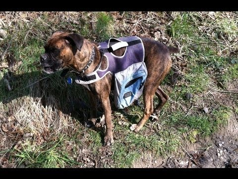 d654467bc8f5 Outward Hound Excursion Dog Backpack Review - YouTube