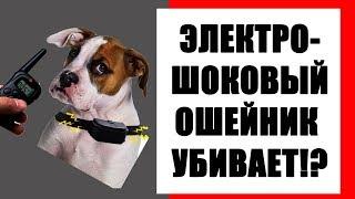 Электрошоковый ошейник убивает! Лучшие электронные ошейники для собак.