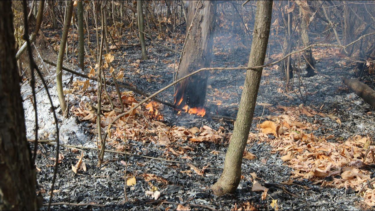 Тушение и последствия лесного пожара в Уральске возле Чагана