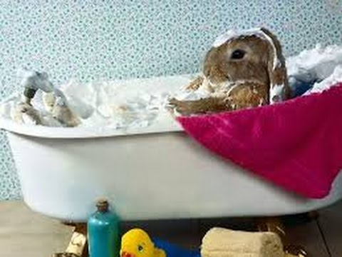 +Как отличить самку кролика.Простой способ определить самка кролика.