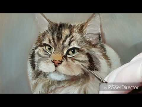 Oil Painting of Beamer the Maine Coon - Part 2