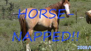 HORSE-NAPPED Chapter 1: The mysterious man