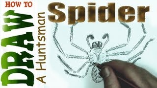 How to Draw a Spider- the Huntsman Spider (for Beginners- Spoken Tutorial)