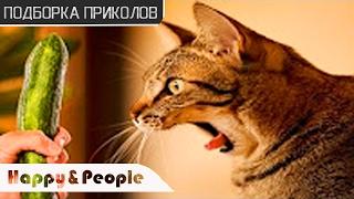 ПРИКОЛЫ с котами 2017! Смотреть всем! ДО СЛЕЗ!