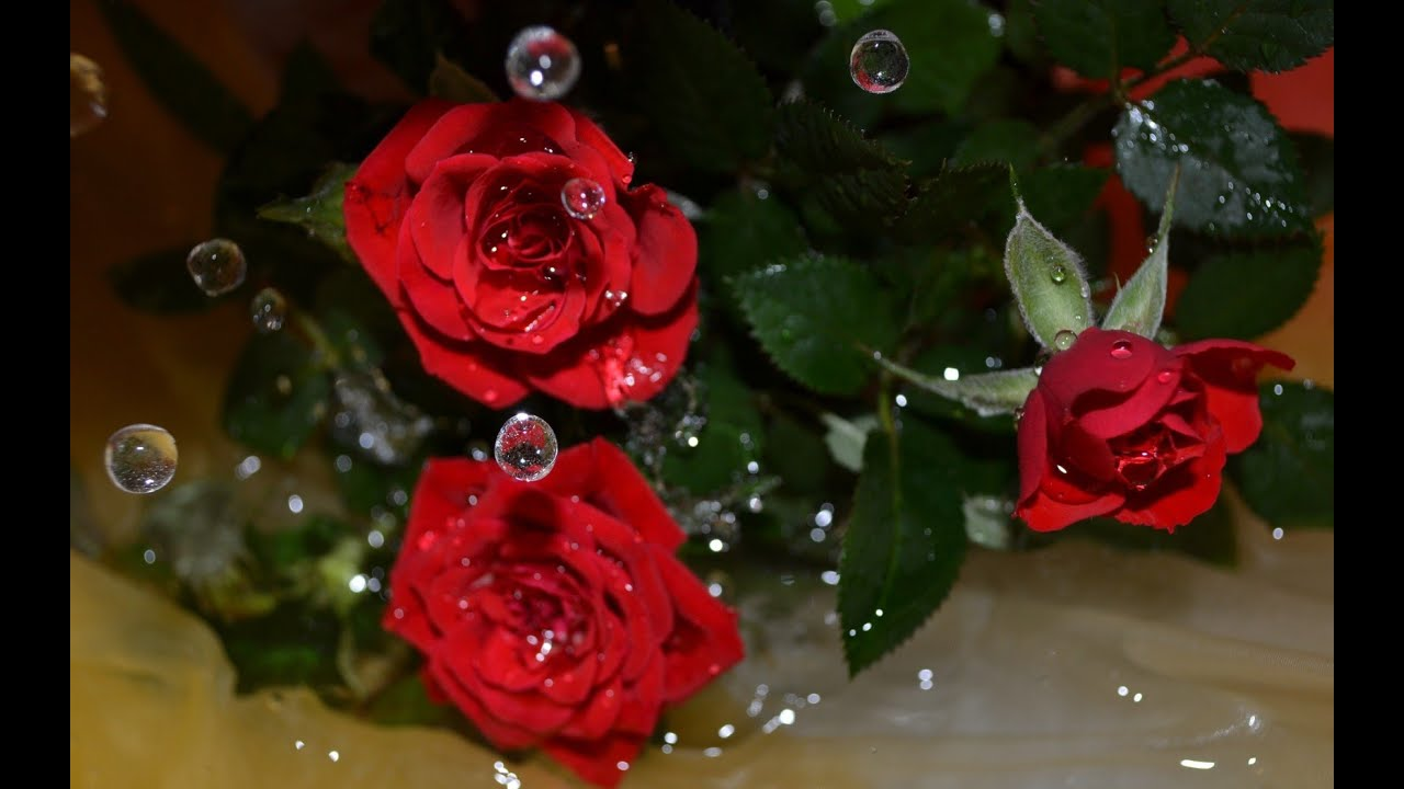 Розы красивая картинка