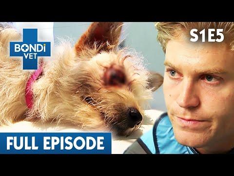 BONDI VET - Season 1 Episode 05