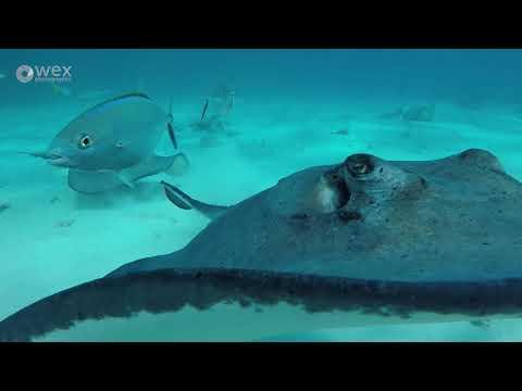 Wex Pro | Luke Massey: Cayman Islands