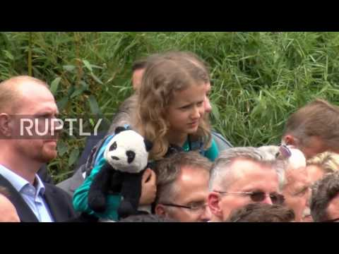 Germany: Panda 'diplomats' lauded as Merkel hosts Xi Jinping at Berlin zoo