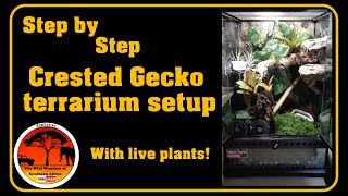 Step by step Crested Gecko terrarium setup (LIVE PLANTS)