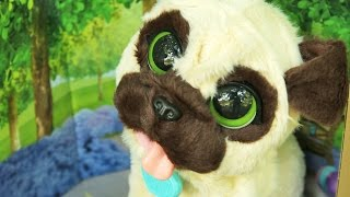 Hasbro - FurReal Friends - Mój skaczący Mopsik JJ - Interaktywny Piesek / JJ My Jumpin' Pug Pet