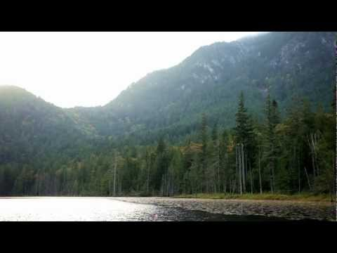 Protect Echo Lake Ancient Forest