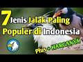 Jenis Burung Jalak Paling Populer Di Indonesia Lengkap Dengan Harganya  Mp3 - Mp4 Download