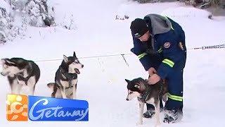 Dog sledding Calgary style   Getaway