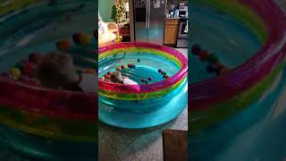 Ball pit in the jump-o-lene with a toddler