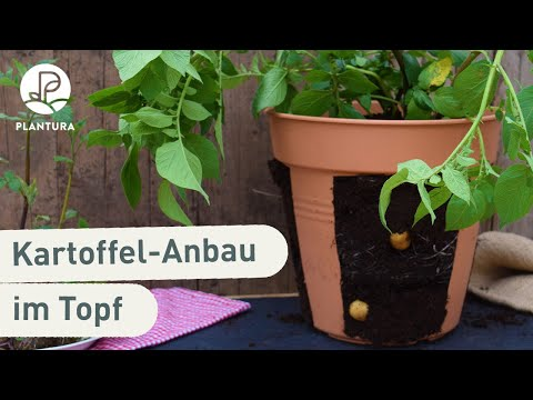 Kartoffeln Anbauen: Kartoffel Im Topf Anpflanzen (Anleitung PotatoPot)