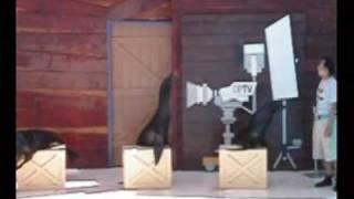 2003 06 01 花蓮海洋公園 海獅表演