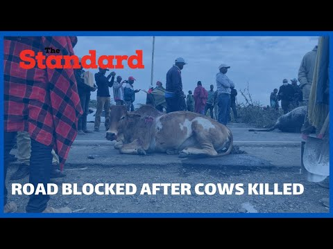 Irate herders block Mai Mahiu-Narok road to protest after 3 cows were run over by motorist