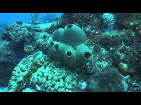 Drift Dive Delila reef Cozumel