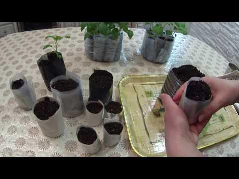 Вопрос: Во что лучше сажать рассаду в картонные, пластиковые горшки или пакеты?